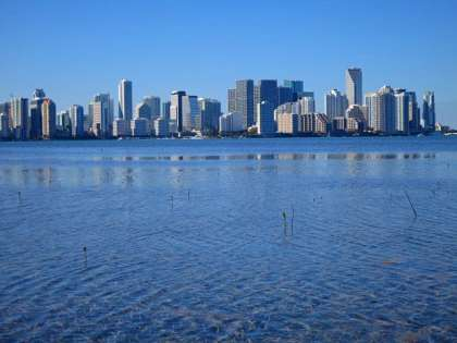 Miami skyline from Virginia Key kayaking trip. Note the tiny mangroves trying to grow in the sea grass shallows.