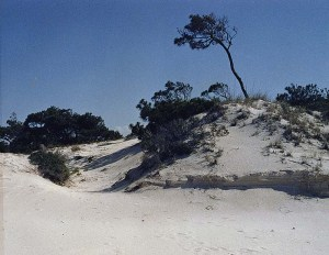 Dunes at St. George Island State Park
