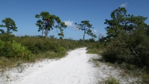 Blue Trail at St Sebastian River State Park