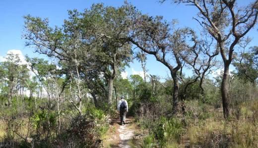 Trail along Tiger Creek Preserve