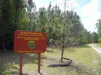 Reforestation of Tiger Bay State Forest