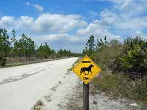 Equestrian crossing on Rima Ridge Road in Tiger Bay State Forest