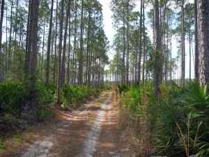 Fire road at Tiger Bay State Park