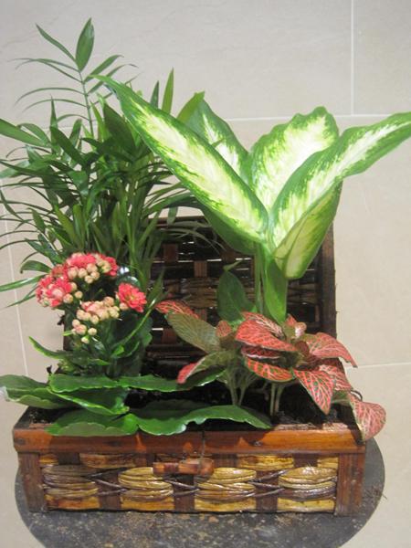 Alegre Centro de plantas