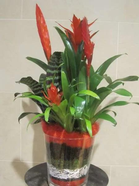El rojo dota de color y alegria este centro de plantas