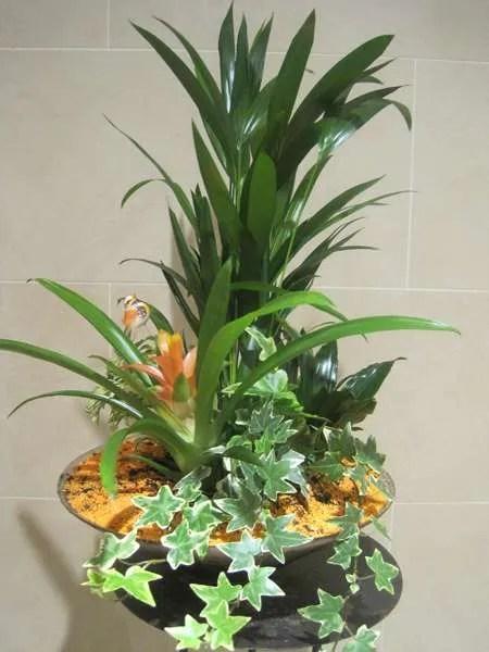 Centro de plantas ideal para decorar nuestro hogar, nuestra oficina