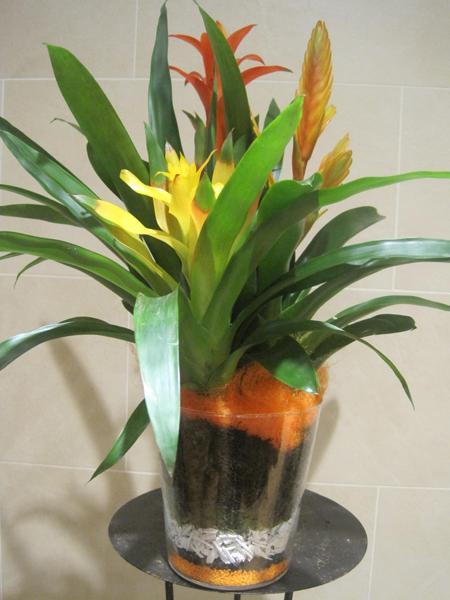 exotico centro de plantas
