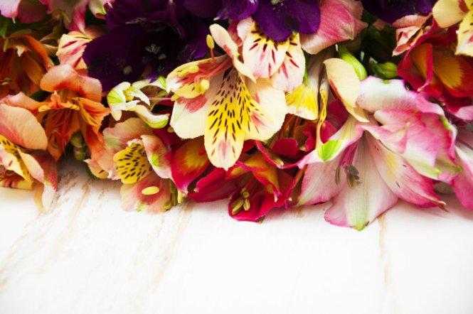 buttercup flower meaning  flower, Natural flower