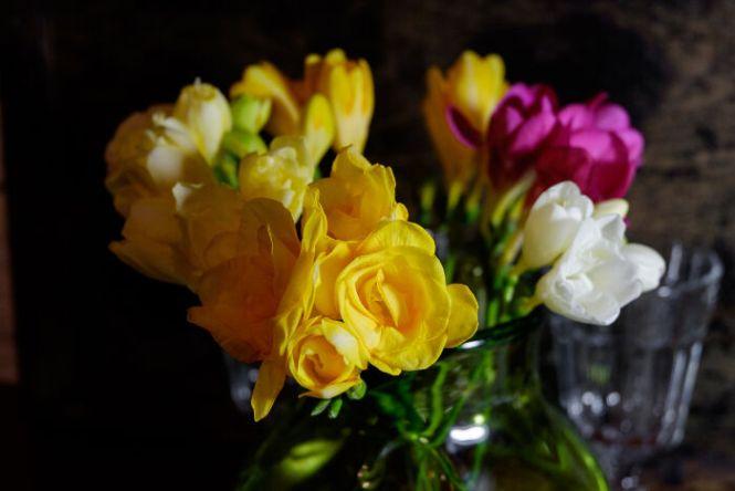 freesia flower  flower, Natural flower