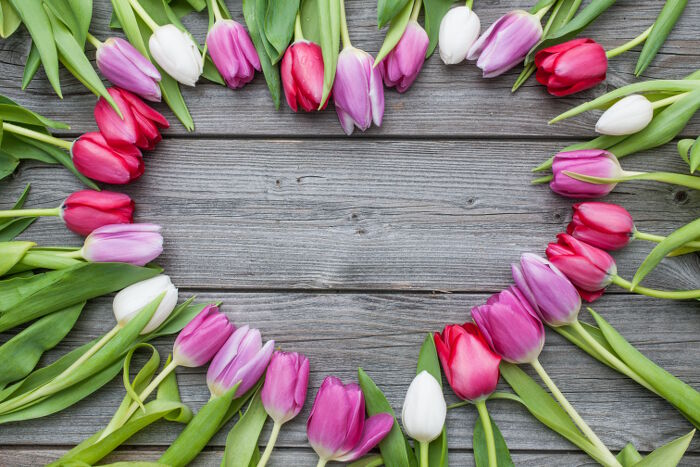 Tulip Flower Meaning   Flower Meaning Frame of fresh tulips arranged on old wooden background