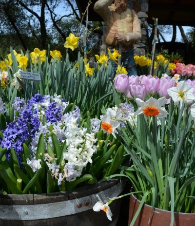 Spring at Ironstone