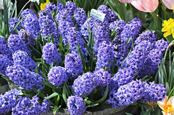 Ironstone Vineyards, 2013 FlowerPatchFarmhouse.com