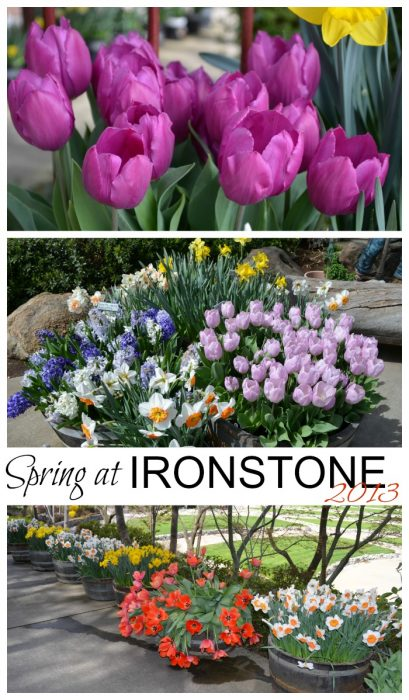 Spring at Ironstone Vineyards 2013, FlowerPatchFarmhouse.com