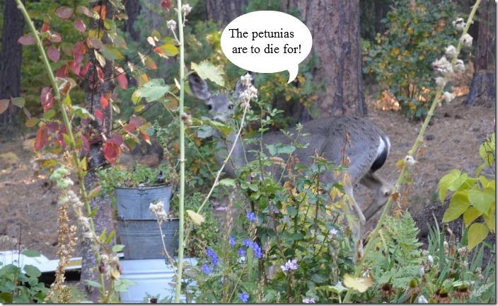deer petunias