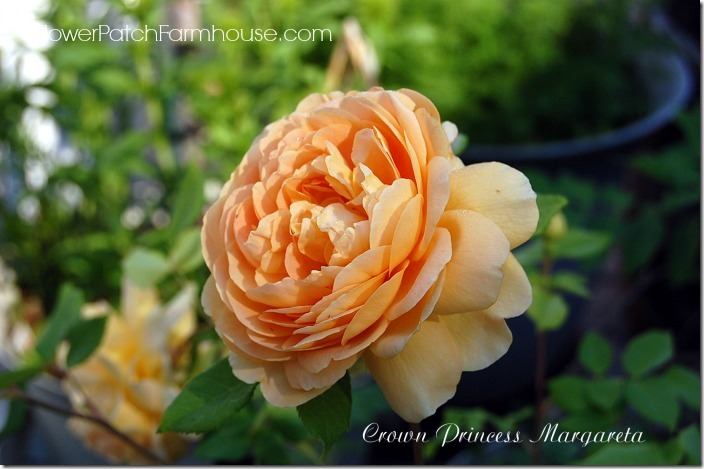 Crown Princess Margareta7