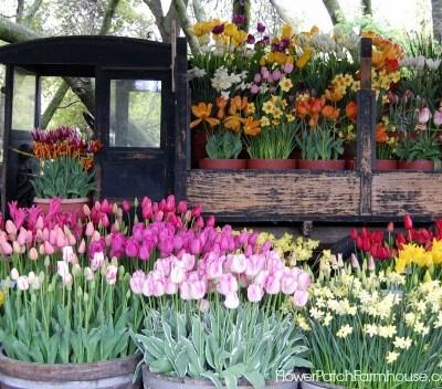 Spring is Here, FlowerPatchFarmhouse.com