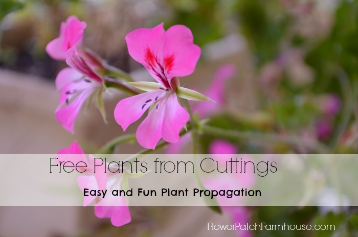 Get free plants! root cuttings from plants you already have and enjoy more. FlowerPatchFarmhouse.com