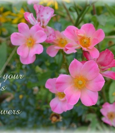 May All Your Weeds Be Wildflowers Quote