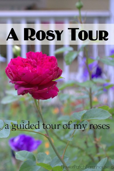 A Walk Through the Roses, June 7