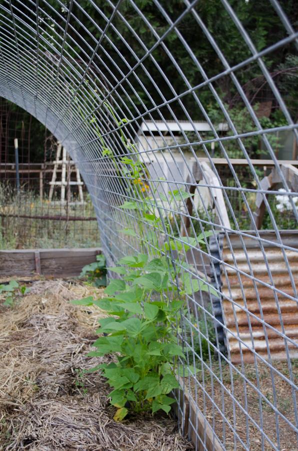 DIY Greenhouse  (4 of 8)