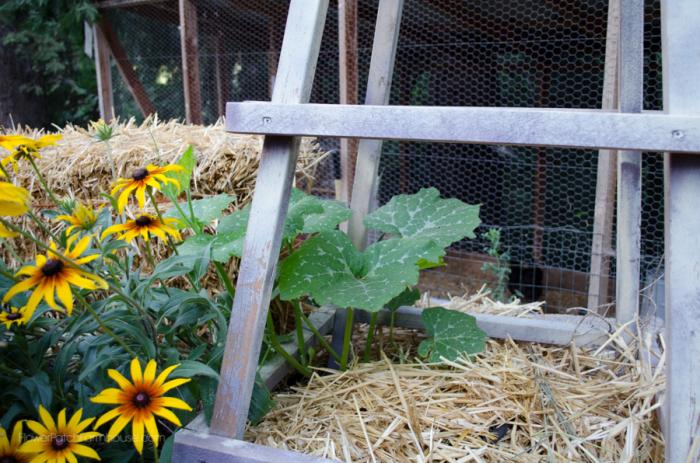 DIY Greenhouse  (5 of 8)