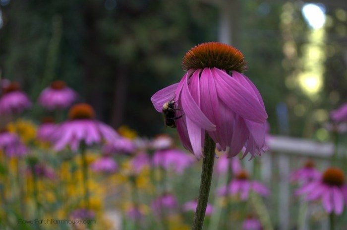 Attract garden pollinators to your garden, it is easier than you think and beautiful too!