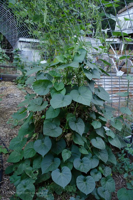 DIY Greenhouse Arbor 2, FlowerPatchFarmhouse.com (5 of 12)
