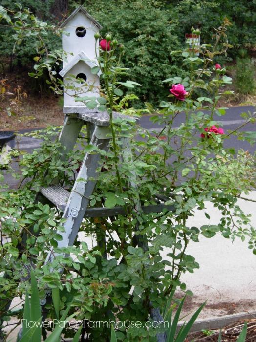 Tess D'Ubervilles rose on Ladder, FlowerPatchFarmhouse.com