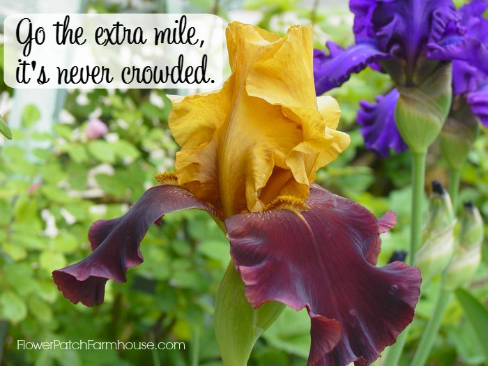 Go the extra mile inspirational quote, FlowerPatchFarmhouse.com