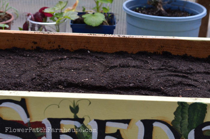 Plant a back door kitchen herb garden in a crate, FlowerPatchFarmhouse.com