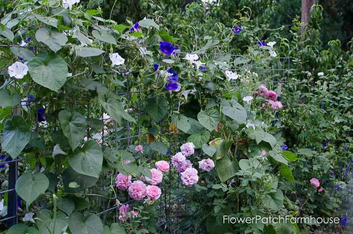 Garden Tour Aug 2, 2015, FlowerPatchFarmhouse.com (38 of 40)