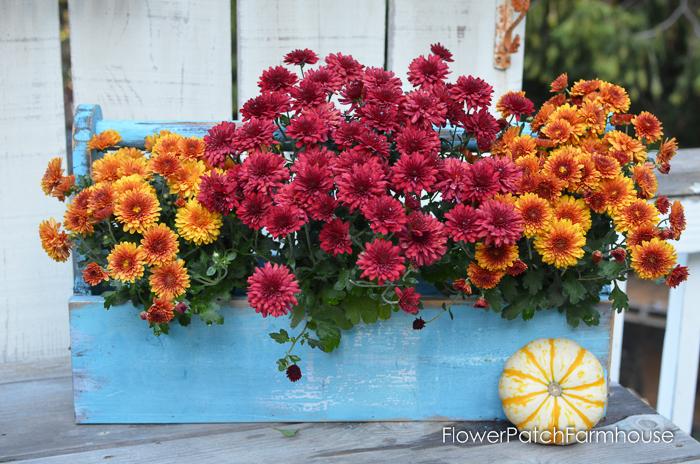 DIY Toolbox planter with Mums. FlowerPatchFarmhouse.com