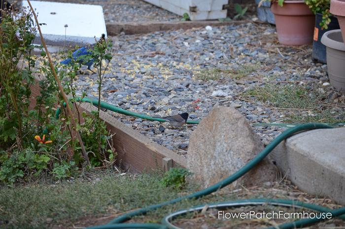 My beautiful garden on Oct 8, FlowerPatchFarmhouse.com (42 of 42)