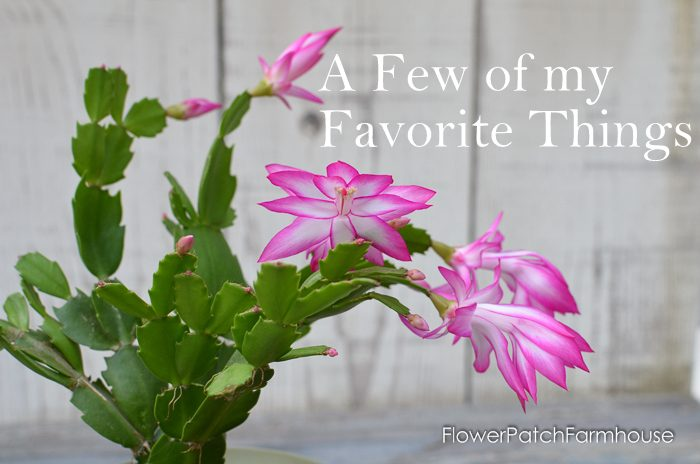Thanksgiving Cactus, FlowerPatchFarmhouse.com