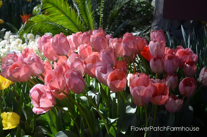 Ironstone March 2016, FlowerPatchFarmhouse.com (72 of 77)