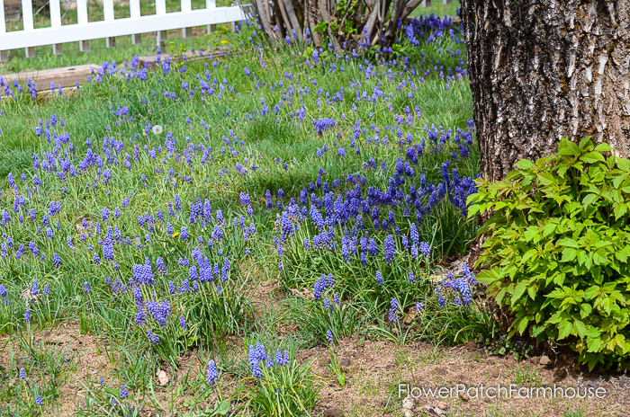 Spring in White Pines April 2016, FlowerPatchFarmhouse.com (13 of 60)