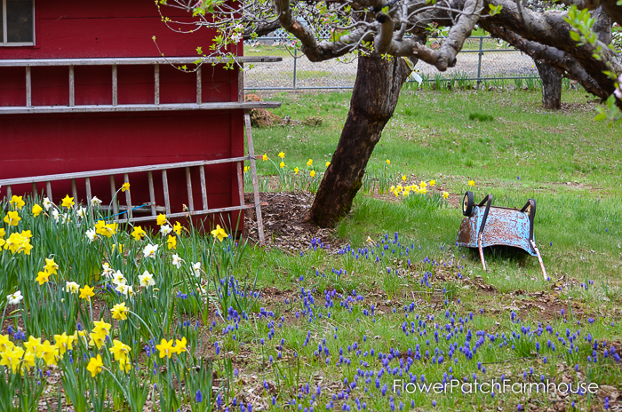 Spring in White Pines April 2016, FlowerPatchFarmhouse.com (25 of 60)