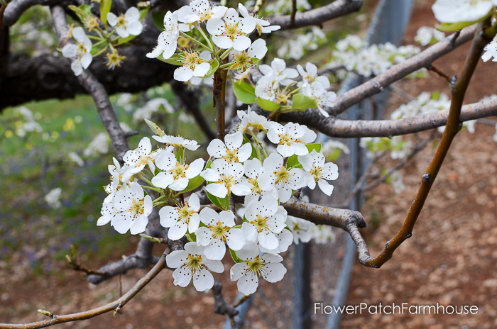 Spring in White Pines April 2016, FlowerPatchFarmhouse.com (31 of 60)