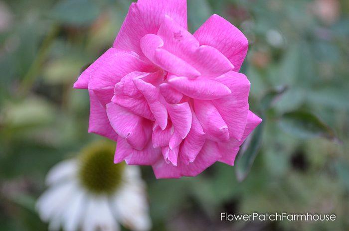 my-garden-in-september-10-of-36