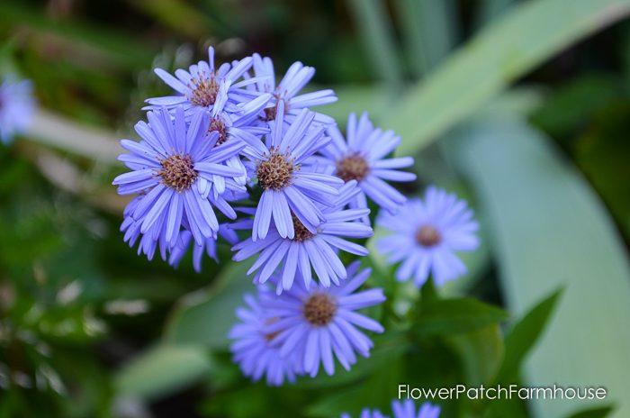 my-garden-in-september-13-of-36