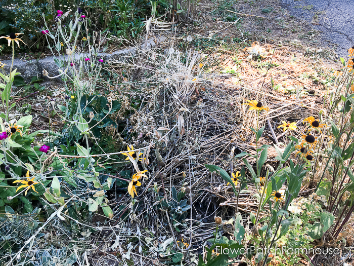Saving Seeds in Fall (12 of 13)