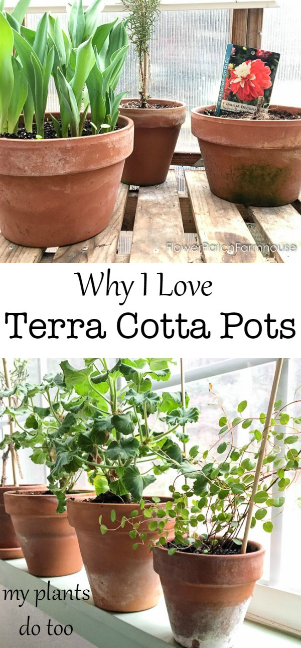 Why I Love using Terra Cotta pots. No need to distress or age, they do it themselves and plants just grow better.  I tell you why!