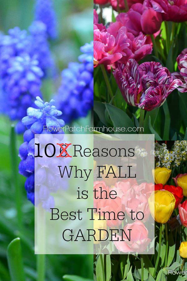 Why fall is the best time to garden flower patch farmhouse fall is the best time to garden and here are ten reasons why garden ideas mightylinksfo