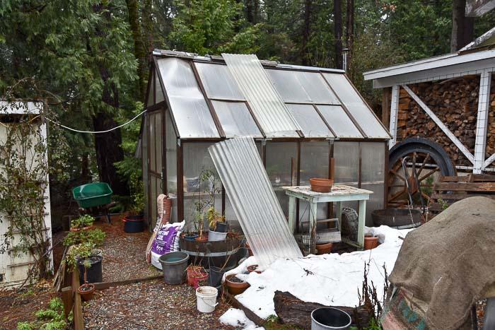 Greenhouse in march, Garden Journal 2