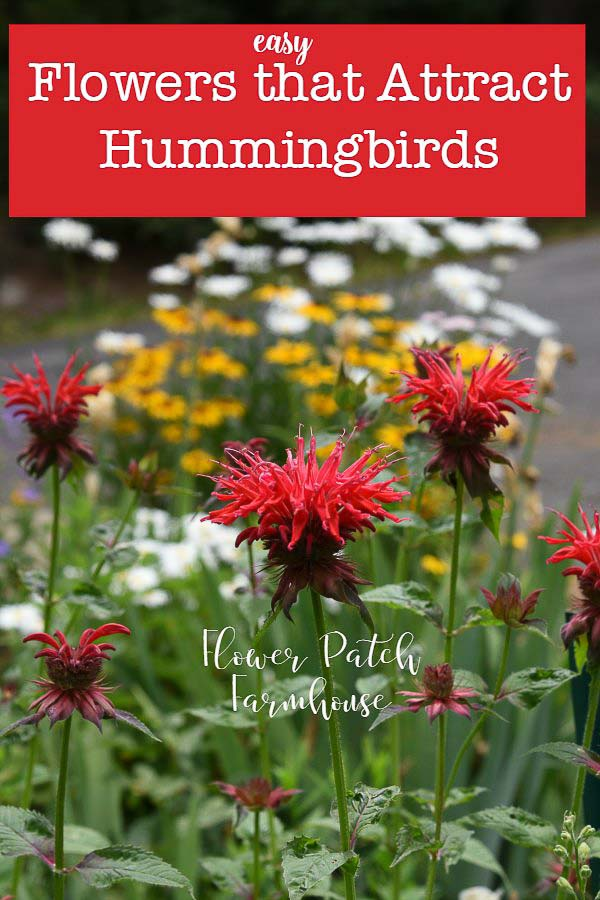 I enjoy a lot of hummingbirds visiting or living around my home. I get many requests for the flowers that attract hummingbirds to my garden so here I will share what I have observed personally. #hummingbirds #cottagegarden #flowersforhummingbirds