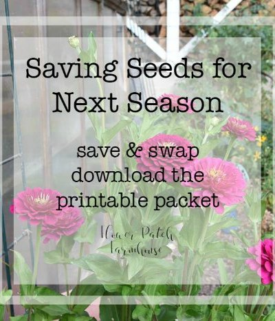 Seed Saving for More Garden Blooms