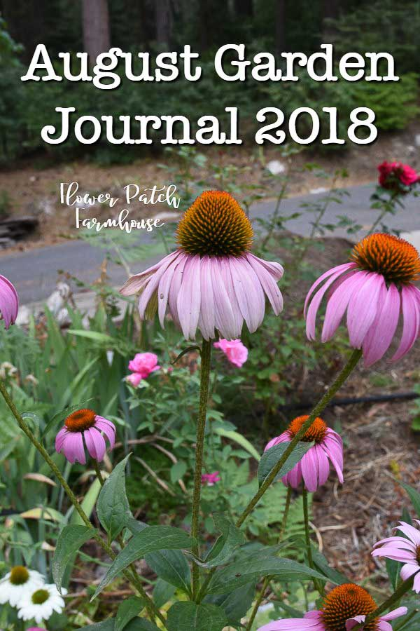August Garden Journal 2018. My update on the garden for August at Flower Patch Farmhouse, dahlias, zinnias, galvanized planters and more glorious blooms to enjoy! #cottagegarden #easygarden #smallgarden #flowergarden #augustflowers