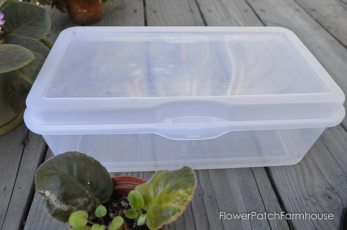 plastic flip top sterlite container,easy Propagate African Violets