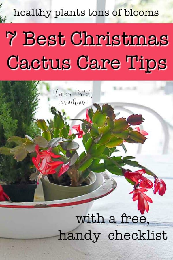 Christmas cactus blooming in centerpiece, FlowerPatchFarmhouse.com