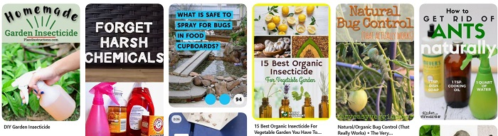 Pinterest collage of images for using organic insecticides